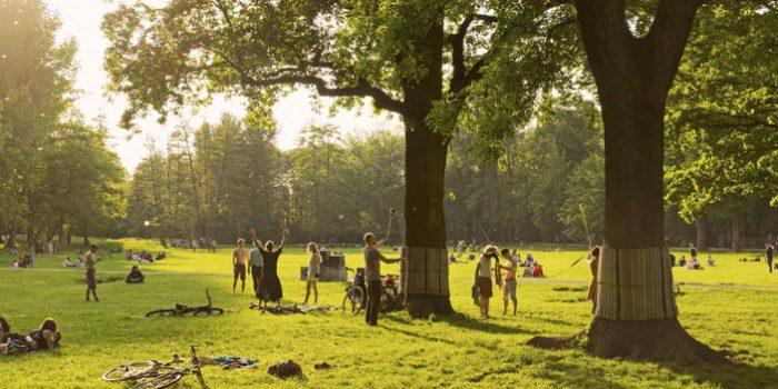 Wie Können Bäume Helfen, Den Klimawandel Zu Reduzieren?